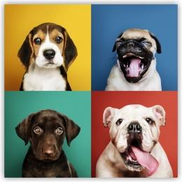 Купить Картина на холсте Очаровательные щенки в России от 364.00 ₽