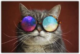 Купить Картина на холсте Кот в космических очках в России от 350.00 ₽