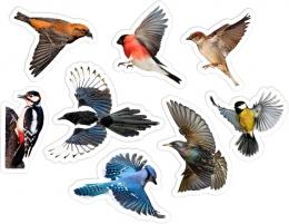 Купить Комплект фигурных двухсторонних элементов для оформления детской площадки Птицы в России от 2962.00 ₽