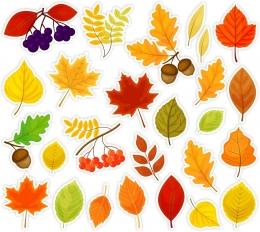 Купить Комплект односторонних фигурных элементов для оформления Осенние листья 715х640мм в России от 1760.00 ₽