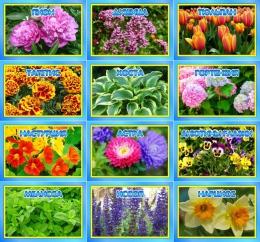 Купить Комплект табличек для экологической тропы цветы 12 шт 200*140мм в России от 1200.00 ₽
