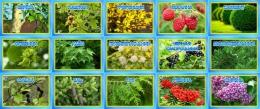Купить Комплект табличек для экологической тропы деревья и кустарники 15 шт., 200*140мм в России от 1499.00 ₽