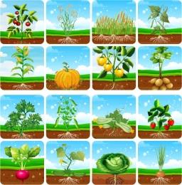 Купить Комплект табличек Огород 150*150 мм в России от 1289.00 ₽