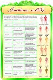 Купить Стенд Анатомия человека с описанием системы органов 600*900мм в России от 1993.00 ₽
