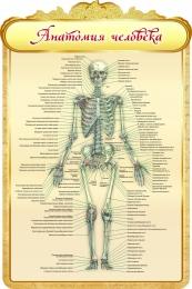 Купить Стенд Анатомия человека в золотистых тонах 600*900мм в России от 2101.00 ₽