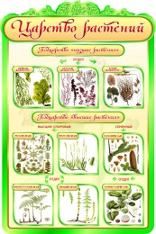 Купить Стенд  Царство растений в кабинет биологии 600*900мм в России от 1993.00 ₽