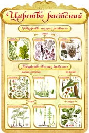 Купить Стенд Царство растений в золотистых тонах 600*900мм в России от 1993.00 ₽