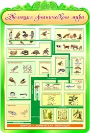 Купить Стенд Эволюция органического мира 900*1320мм в России от 4621.00 ₽