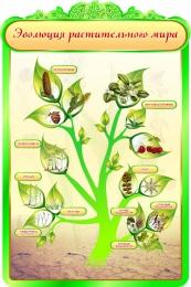 Купить Стенд Эволюция растительного мира в кабинет биологии 600*900мм в России от 1993.00 ₽