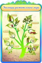 Купить Стенд Эволюция растительного мира в кабинет биологии в золотисто-бирюзовых тонах 600*900мм в России от 1998.00 ₽