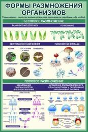 Купить Стенд Формы размножения организмов в кабинет биологии в зеленых тонах 760*1150 мм в России от 3286.00 ₽