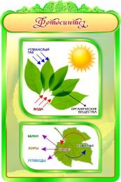Купить Стенд Фотосинтез в кабинет биологии 600*900мм в России от 1993.00 ₽