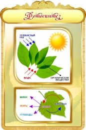 Купить Стенд Фотосинтез в золотистых тонах 600*900мм в России от 1993.00 ₽