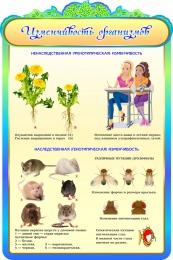 Купить Стенд Изменчивость организмов в золотисто-бирюзовых тонах 600*900мм в России от 2101.00 ₽