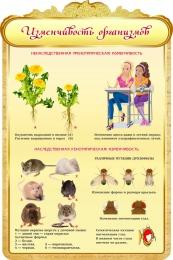 Купить Стенд Изменчивость организмов в золотистых тонах 600*900мм в России от 2101.00 ₽