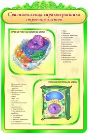 Купить Стенд Сравнительная характеристика строения клеток в кабинет биологии 600*900мм в России от 1998.00 ₽