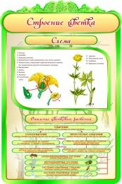 Купить Стенд Строение цветка в кабинет биологии 600*900мм в России от 1993.00 ₽
