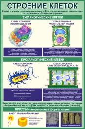 Купить Стенд Строение клеток в кабинет биологии в зеленых тонах 760*1150 мм в России от 3120.00 ₽