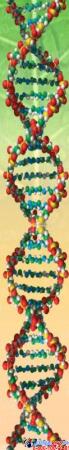Стенд фигурный Биология - наука о жизни! В жёлтых тонах 1900*900мм Изображение #3