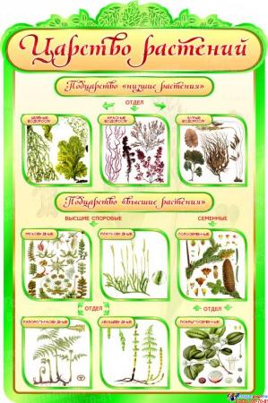 Стенд  Царство растений в кабинет биологии 600*900мм