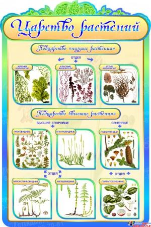 Стенд  Царство растений в кабинет биологии в золотисто-бирюзовых тонах 600*900мм