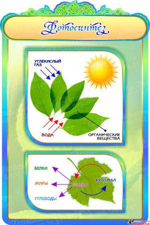 Стенд Фотосинтез в золотисто-бирюзовых тонах 600*900мм