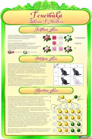 Стенд  Генетика Закон Менделя в кабинет биологии 600*900мм