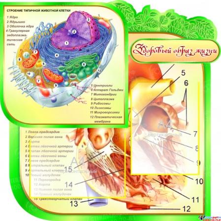 Стенд фигурный Биология- наука о жизни! в кабинет биологии 2800*1020мм Изображение #4