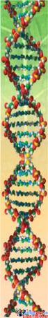 Стенд фигурный Биология - наука о жизни! 1900*650мм Изображение #2