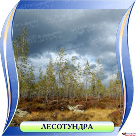 Комплект стендов Природные зоны для кабинета географии Изображение #11