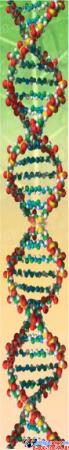 Стенд фигурный Биология - наука о жизни! 1900*900мм Изображение #4