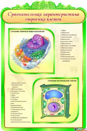 Стенд Сравнительная характеристика строения клеток в кабинет биологии 600*900мм