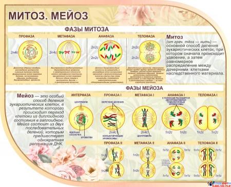 Стендовая композиция Строение клетки ткани растений в бежевых тонах 2500*850 мм Изображение #1