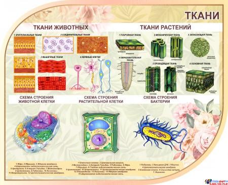 Стендовая композиция Строение клетки ткани растений в бежевых тонах 2500*850 мм Изображение #3
